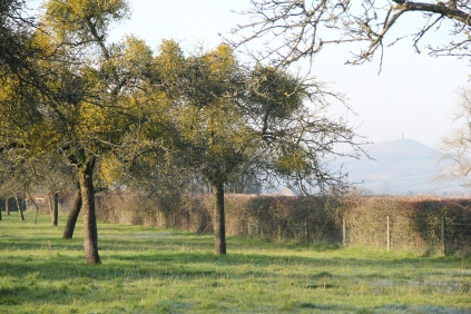 View of Glastonbury Tor from West Bradley Orchard
