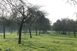 West Bradley Orchard
