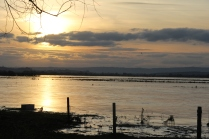 Frozen Flood, near Kingsbury Episcopi 1