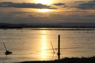 Frozen Flood, near Kingsbury Episcopi 2