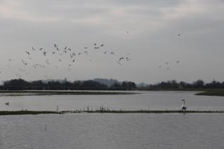Birdlife on the Flood