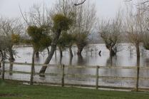 Flooded orchard, near Kingsbury Episcopi