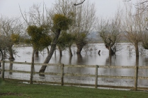 Flooded orchard, near Kingsbury Episcopi