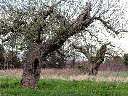 debbie-ball-orchard-edit-1-small